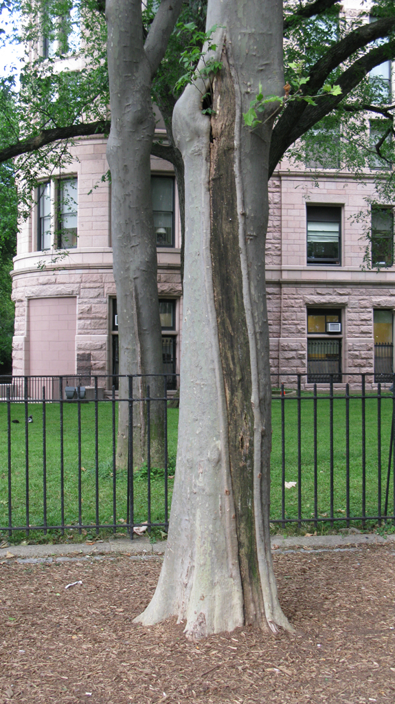 split tree bark for web