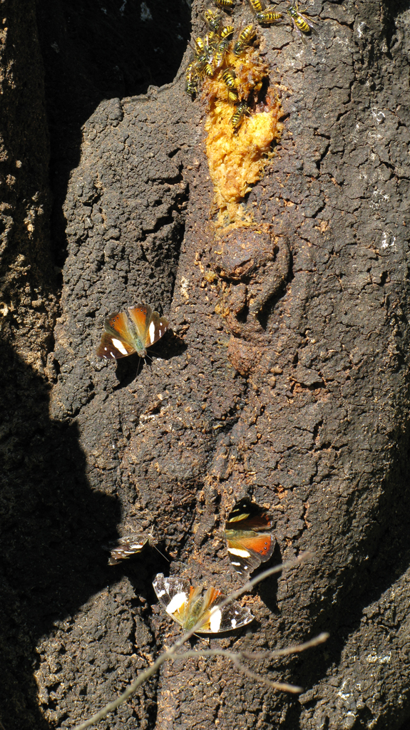 wasps and butterflies for web